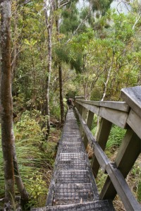 Great Barrier island - Kaiaraara track