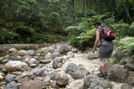Hiking on Great Barrier Island NZ