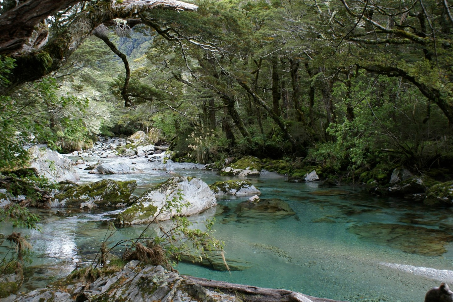 Routeburn track South Island New Zealand