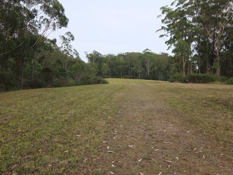 Kerikeri Eucalyptus trees