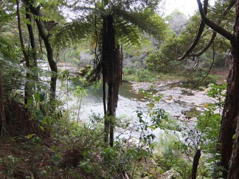 Riverside walk Kerikeri