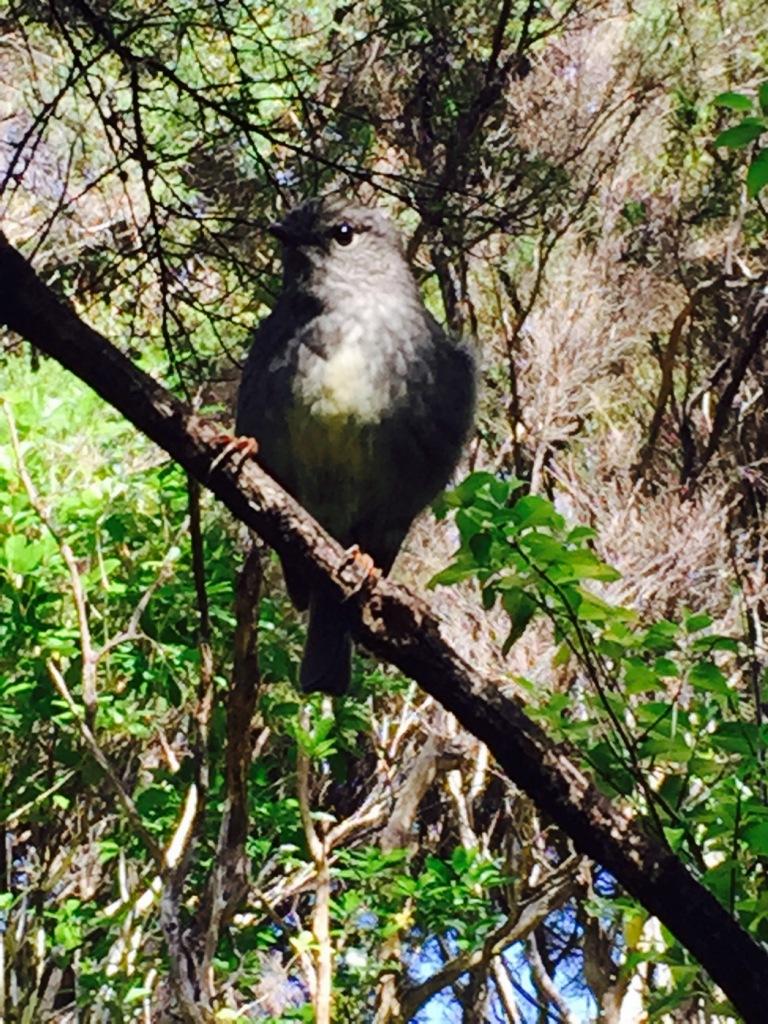 Birds at Tawharanui Regional Park