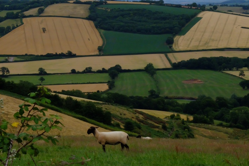 We love the patchwork effect of the countryside around Thorverton and throughout the entire area.