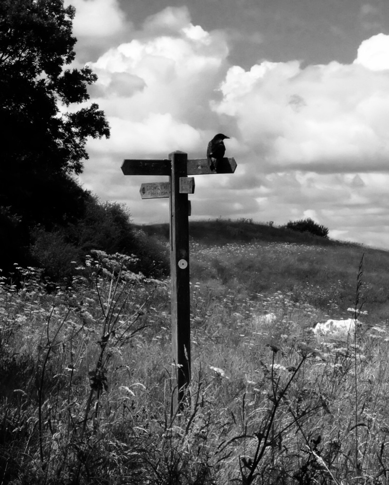 A crow adorns one of the Cotswold Way signs