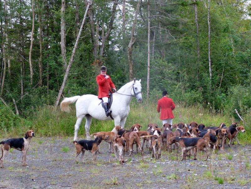 Training the young hounds which included the hunt horn. It was a very serious business.