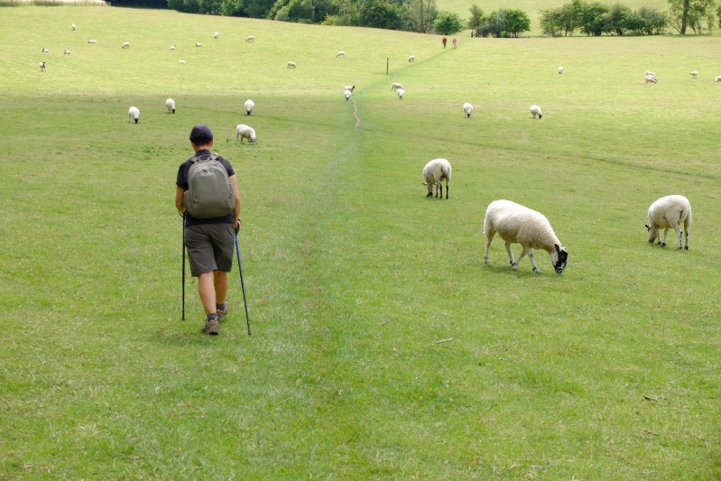 The black faced sheep remained our companions at many stages along the walk