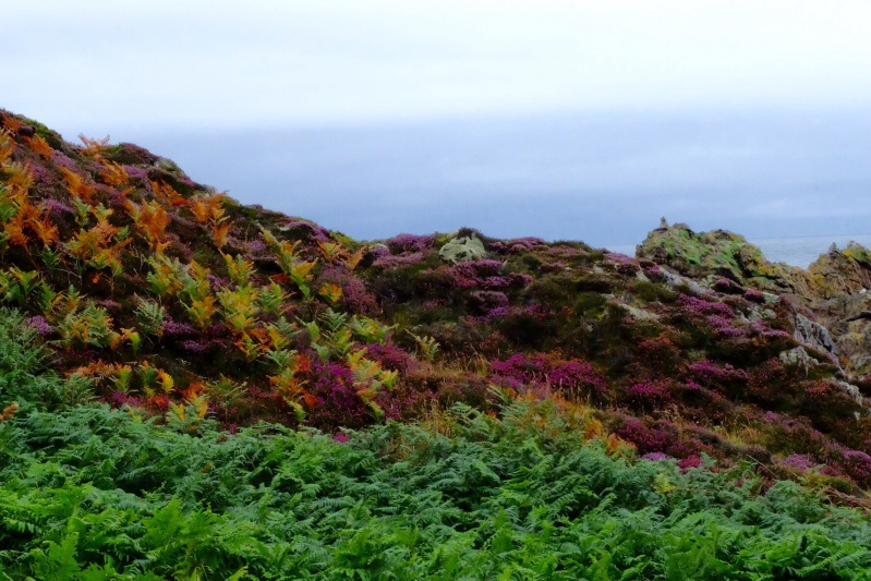 An array of colour with the heather, bracken and rocks,.
