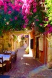 The bouganvillia reminded us of home