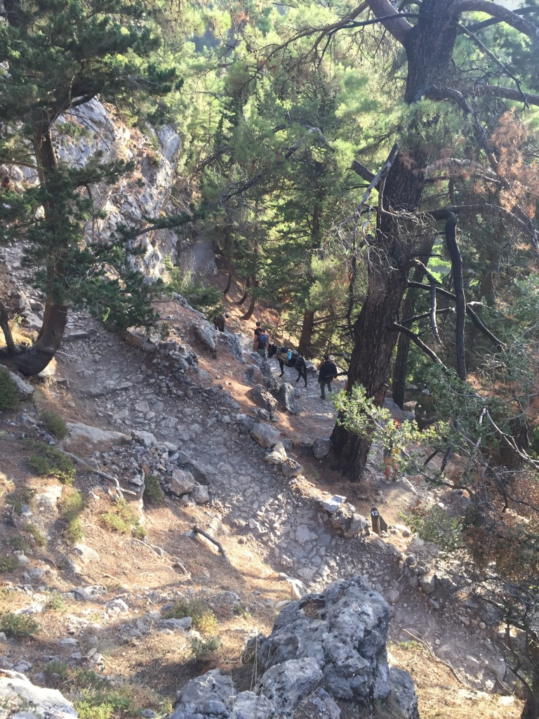 The initial path down the start of the walk is well formed but steep with many switch backs.Pic courtesy Ruth iPhone 6