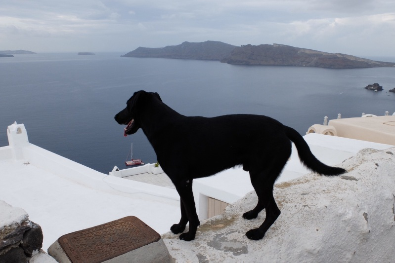 "Like the cats, the dogs look to be ""freelance"" and in Santorini looked for fellow trouble makers by balancing on the pathway walls."