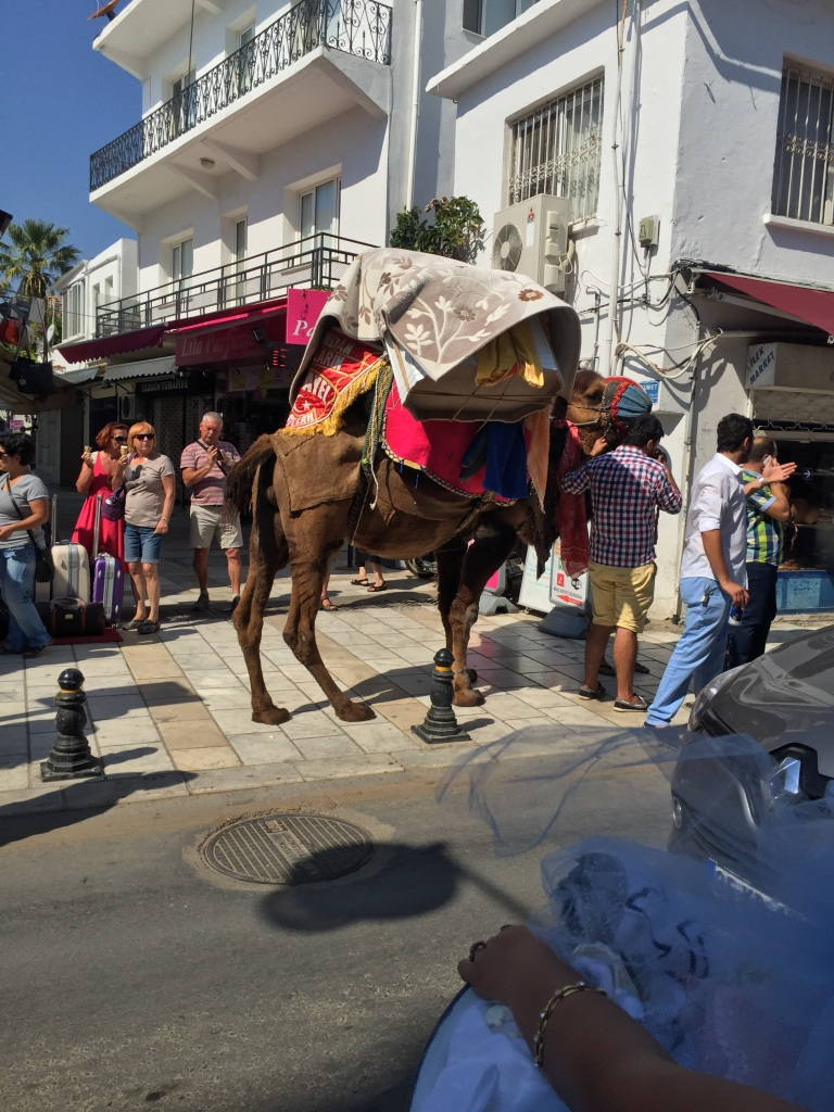On both days we have been in Bodrum we have heard loud music, yesterday a bride was being led along on a donkey, today there was not bride but a camel laden with gifts and a procession of people behind all bearing gifts, some carrying them on their heads, they are wedding processions. They are the moments you don't expect.