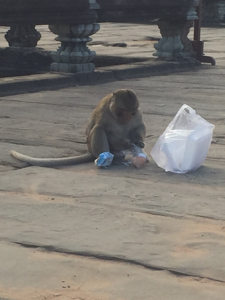 Warning: don't take your food in a plastic bag, the monkeys know what it is, we saw two people lose their breakfast or lunch as a monkey would undertake a hit and run manoeuvre and they knew exactly how toget into the goodies, you unwrap them.