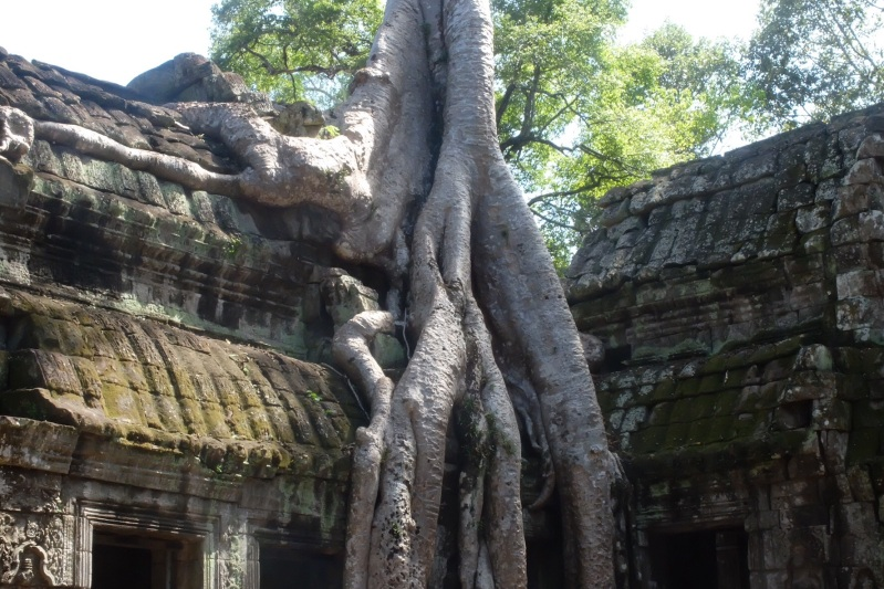 Probably what our house will look like when weget back. Ta Prohm has been left as it was found.