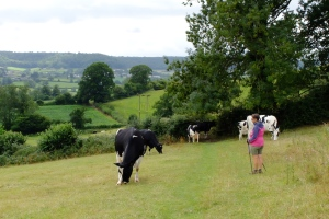 Strolling across a farm on the Cotswold Way