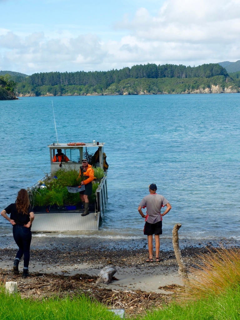 The second barge load of plants arrives