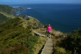 Te Paki track east of Cape Rienga