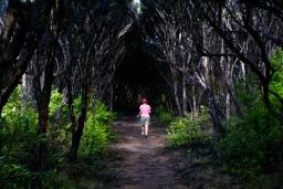 Walking through the manuka