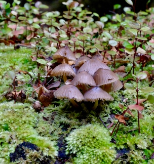 A gaggle of toadstools