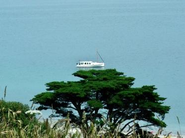 Tree boat