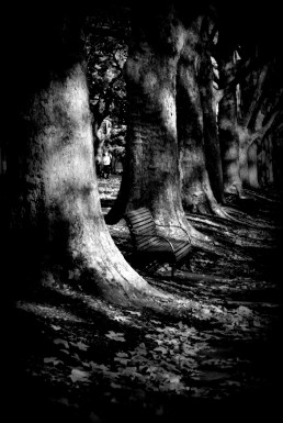 Spooky old trees