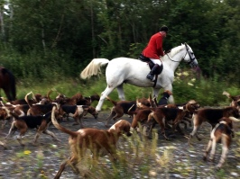 Training the hounds - Galway Ireland