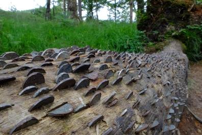 The Money Tree - Lake District UK