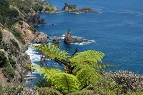 Coastal fern