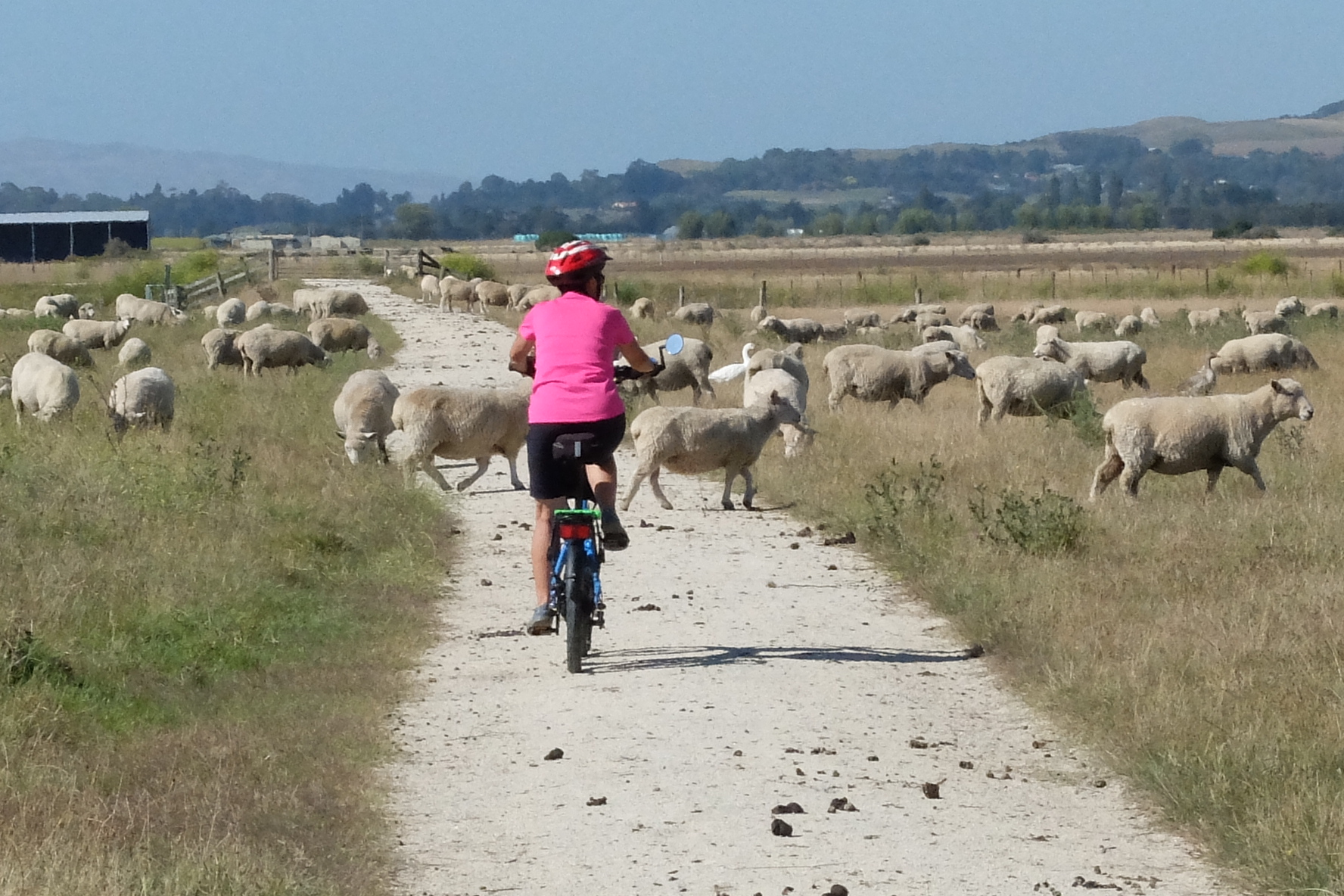 Kiwi Bike trip – through The Bay