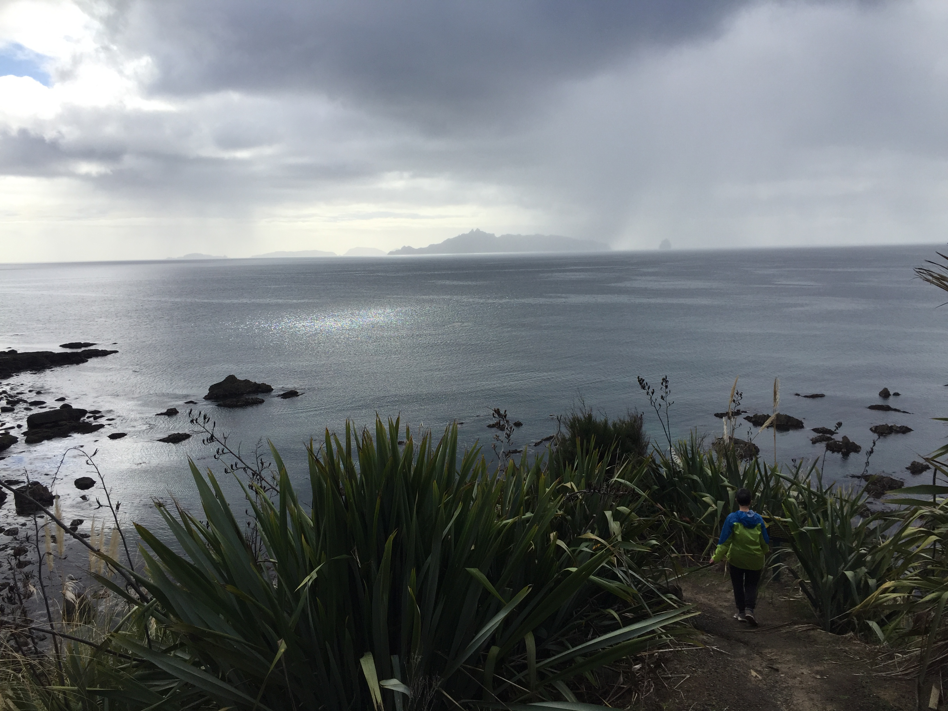 Mangawhai Coastal Walk – A bit of everything
